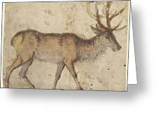Study Of A Stag Recto,  Study Of Goats Verso Lucas Cranach Greeting Card