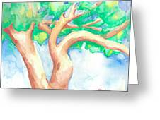 Study Of A Tree Greeting Card