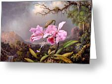 Study Of An Orchid Greeting Card