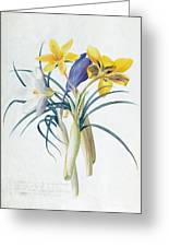 Study Of Four Species Of Crocus Greeting Card