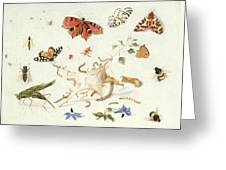 Study Of Insects And Flowers Greeting Card