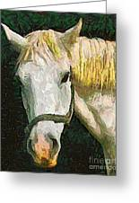 Study Of The Horse's Head Greeting Card