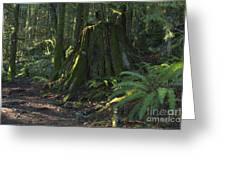 Stump And Fern Greeting Card
