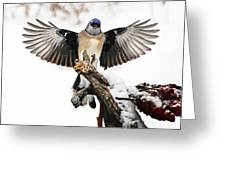 Stumped  Bluejay Greeting Card