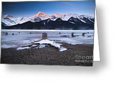 Stumps At Spray Lakes Greeting Card