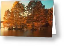 Stumpy Sunset Greeting Card