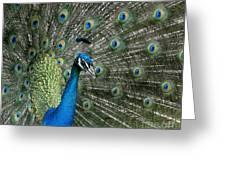 Stunning 2 Greeting Card