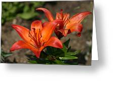 Stunning Lilly Greeting Card