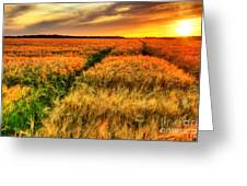 Stunning Sunset Over Cereal Field Greeting Card