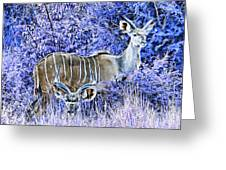 Styled Environment- Modern Kudus V3 Greeting Card