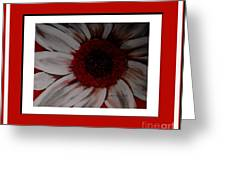 Stylized Daisy With Red Border Greeting Card