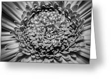 Subtle Complexity In Black And White Greeting Card