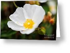 Subtle Water Drops Greeting Card