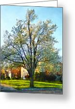 Suburbs - Late Afternoon In Spring Greeting Card