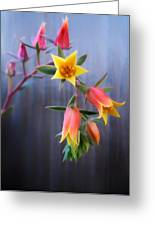 Succulent 23 Greeting Card