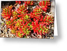 Succulent 3 Greeting Card