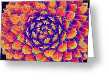 Succulent 7 Greeting Card
