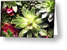 Succulent Beauties Greeting Card