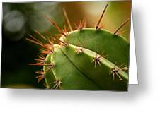 Succulent Defences Greeting Card by Jacqui Collett
