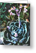Succulent Flower Caught In A Moonbeam Greeting Card