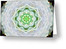Succulent Mandala Greeting Card
