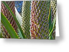 Succulents IIi Greeting Card