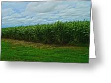 Sugar Cane Fields Greeting Card