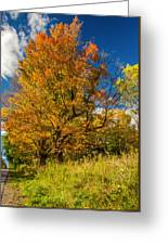 Sugar Maple 3 Greeting Card