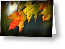 Sugar Maple Fall Colors Greeting Card