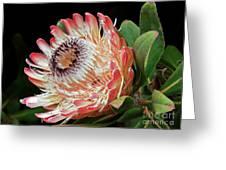 Sugarbush And Bees Greeting Card