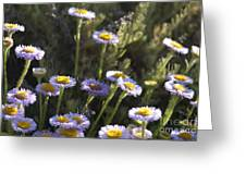 Suisun Marsh Aster In The Morning Light Greeting Card
