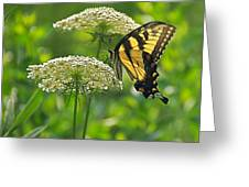 Sultry Summer Day Greeting Card