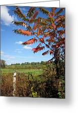 Sumac Fence Greeting Card