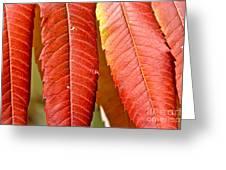 Sumac Leaves Greeting Card