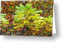 Sumac Leaves In The Fall Greeting Card