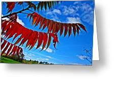 Sumac Red Greeting Card
