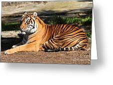 Sumatran Tiger 7d27310 Greeting Card by Wingsdomain Art and Photography
