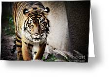 Sumatran Tiger  Greeting Card