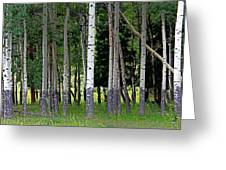 Summer Aspen Greeting Card