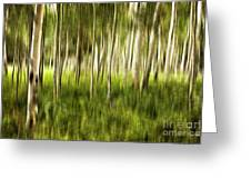 Summer Aspens Greeting Card