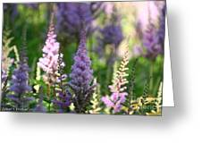 Summer Astilbe Greeting Card