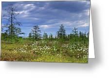 Summer At The Bog... Greeting Card