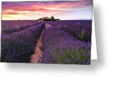 Summer At Valensole Greeting Card