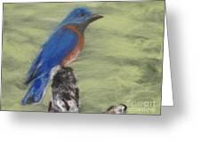 Summer Blue Bird Greeting Card