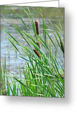 Summer Cattails In The Breeze Greeting Card