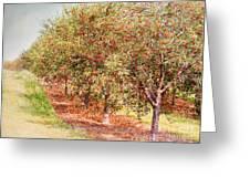 Summer Cherries Greeting Card