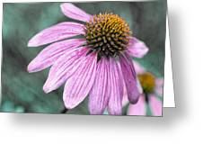 Summer Conedlower Greeting Card