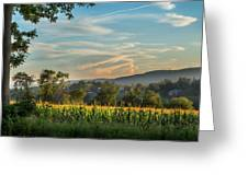 Summer Corn Greeting Card by Bill Wakeley