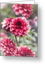 Summer Dahlia Greeting Card