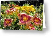 Summer Daylilies Greeting Card
